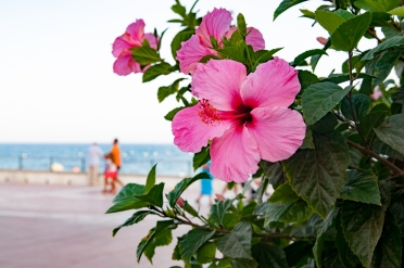 Estepona Travelphotography