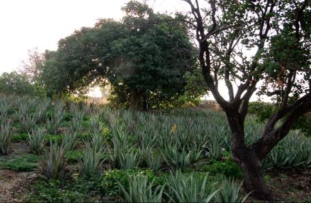 Santaverde Farm